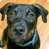 Adopt A Pet :: Elouise - Lisbon, OH
