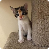 Adopt A Pet :: Gazelle - Newtown Square, PA