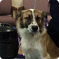 Adopt A Pet :: Dennis - Buffalo, WY