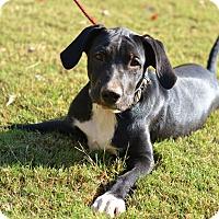 Adopt A Pet :: Yaffa - XY litter - Acworth, GA