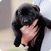 Adopt A Pet :: Mulan $250 - Seneca, SC