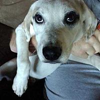 Adopt A Pet :: Ellen - Disney, OK