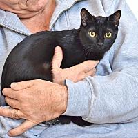 Adopt A Pet :: Marigold - Davis, CA