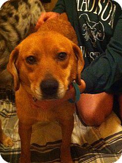 Catahoula Leopard Dog/Hound (Unknown Type) Mix Dog for adoption in McKeesport, Pennsylvania - Lil Miss
