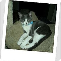 Adopt A Pet :: Jubilant Jasper - Hurst, TX