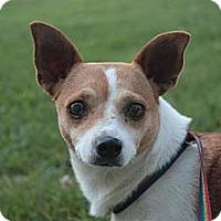 Adopt A Pet :: Clover - Stilwell, OK