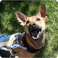 Adopt A Pet :: ~*~ POPEYE ~*~ - Concord, CA