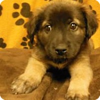 Adopt A Pet :: Zita - Gary, IN