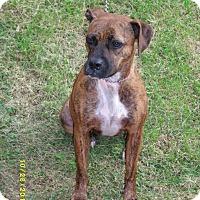 Adopt A Pet :: Kierra-prison obedience traine - Hazard, KY