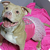 Adopt A Pet :: Tiny - Forked River, NJ