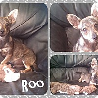 Adopt A Pet :: Roo - DOVER, OH
