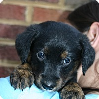 Adopt A Pet :: Martha - Portland, ME