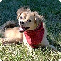 Adopt A Pet :: Toby - Mocksville, NC