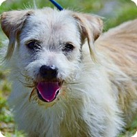 Adopt A Pet :: McGruff - Bradenton, FL