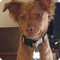 Adopt A Pet :: Opal - Van Nuys, CA