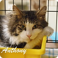 Adopt A Pet :: Anthony - Ocean City, NJ