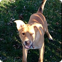 Adopt A Pet :: RUFUS - in Milwaukee - Pewaukee, WI