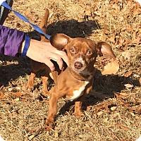 Adopt A Pet :: Fruit Stripe - Bloomfield, CT