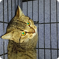 Adopt A Pet :: COQUETTA - Phoenix, AZ