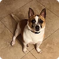 Adopt A Pet :: Paco - West Allis, WI