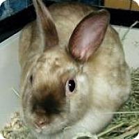 Adopt A Pet :: Honey - Woburn, MA