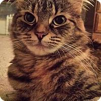 Adopt A Pet :: Mooch - Raritan, NJ