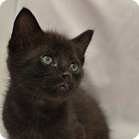 Adopt A Pet :: Mint Chocolate Chip 160847 - Atlanta, GA