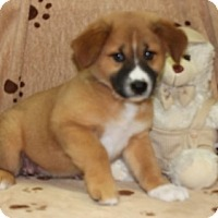 Adopt A Pet :: Matye - Salem, NH