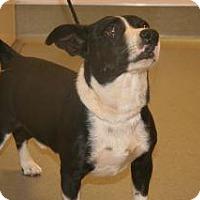 Adopt A Pet :: Bud - Wildomar, CA