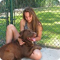 Adopt A Pet :: Hooch - Groton, MA
