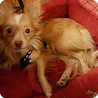 Adopt A Pet :: Leo - Andalusia, PA