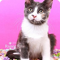 Adopt A Pet :: Miley - Sterling Heights, MI