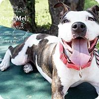 Adopt A Pet :: Olive - Austin, TX