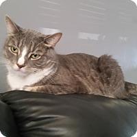 Adopt A Pet :: Dale - Hamilton, ON