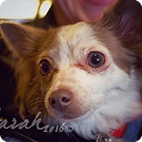 Adopt A Pet :: Queenie - Streamwood, IL