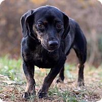 Adopt A Pet :: Minky - Waldorf, MD