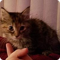 Adopt A Pet :: Tiny Tina - Trenton, NJ