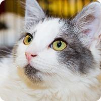 Adopt A Pet :: Riley - Irvine, CA