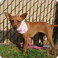Adopt A Pet :: *BRITNEY - Norco, CA