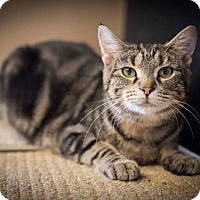 Adopt A Pet :: Josie - Madionsville, KY