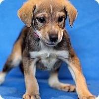 Adopt A Pet :: Baltimore - Waldorf, MD