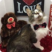 Adopt A Pet :: Toby - Pasadena, TX
