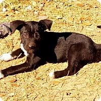 Adopt A Pet :: Ricky - San Antonio, TX