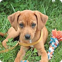 Adopt A Pet :: Tye - Stilwell, OK