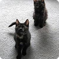 Adopt A Pet :: Bibsy - Kirkwood, DE