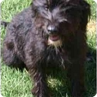 Adopt A Pet :: DAMY-DANIELLA - Gilbert, AZ