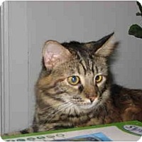 Adopt A Pet :: Kenzie - Jeffersonville, IN