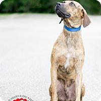 Adopt A Pet :: Gomer - Jupiter, FL