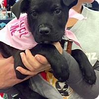 Adopt A Pet :: Raven - Scottsdale, AZ