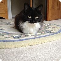 Adopt A Pet :: Orlanda - Arlington, VA